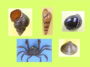 Crustaceans & Mollusks in Lake