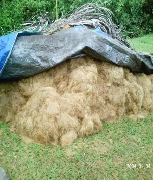Coco fiber